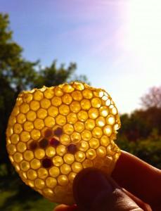 Wabenüberbau mit Polleneintrag